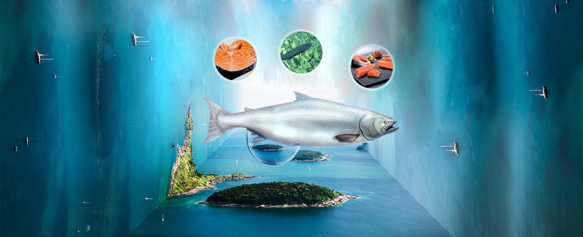 进口海鲜三文鱼