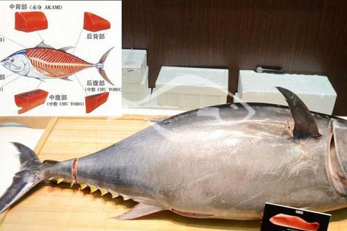 金枪鱼分布范围