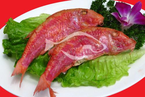 进口海鲜 红鱼生活习性