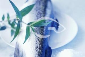 重庆三文鱼